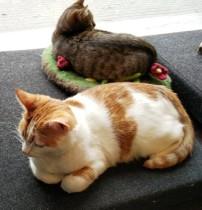 Kohvik Nurri – joogat õpi kassidelt!