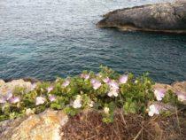 Vahemere müstilised saared: Gozo. 3. osa